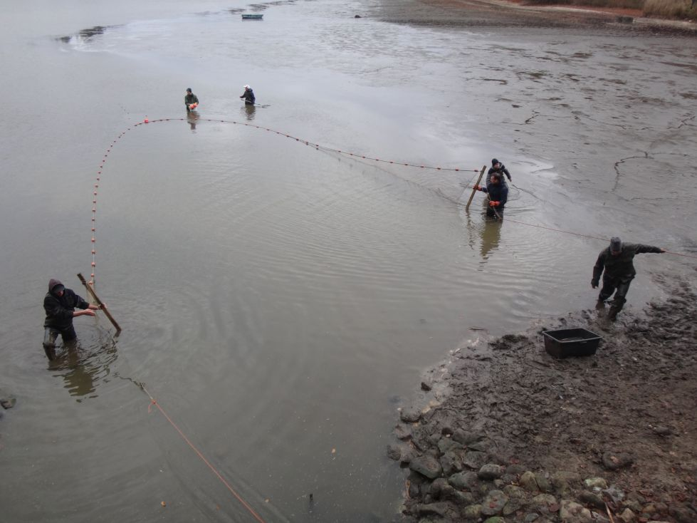 Direkt am Abfluss von Teich 1 ist das Wasser am tiefsten. Ideal zum Abfischen.