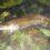 Quappen-Jagd an der Alster 2