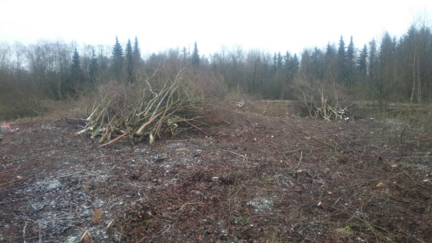 Nahe: Holzfällarbeiten