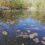 Wulksfelde: Angel-Teich bleibt bis auf Weiteres abgelassen.